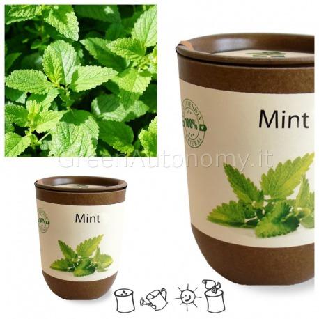 ecocan piante aromatiche menta