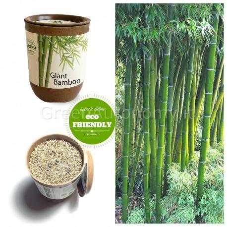 Ecocan vaso ecologico bambù