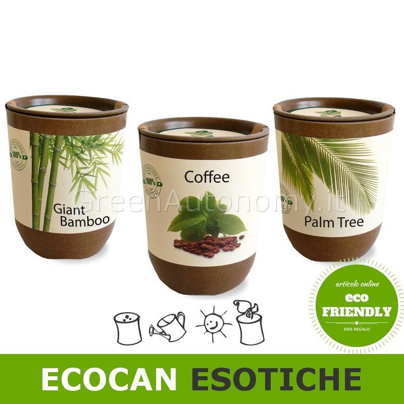 Ecocan vaso in bamb biodegradabile con semi ideale per for Semi di bambu