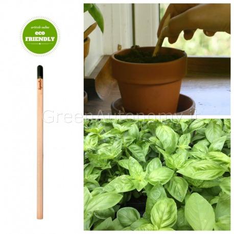 eco-matita che si pianta sprout basilico
