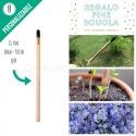 Sprout matita che si pianta per regalo fine scuola