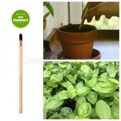 Sprout Basilico eco-matita originale che si pianta