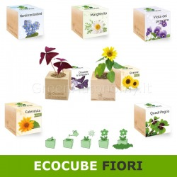 Pianta fiori ecocube idea regalo originale ecologica green