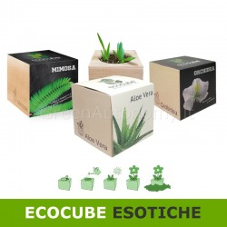 Ecocube pianta esotica idea regalo per amici parenti eco-green